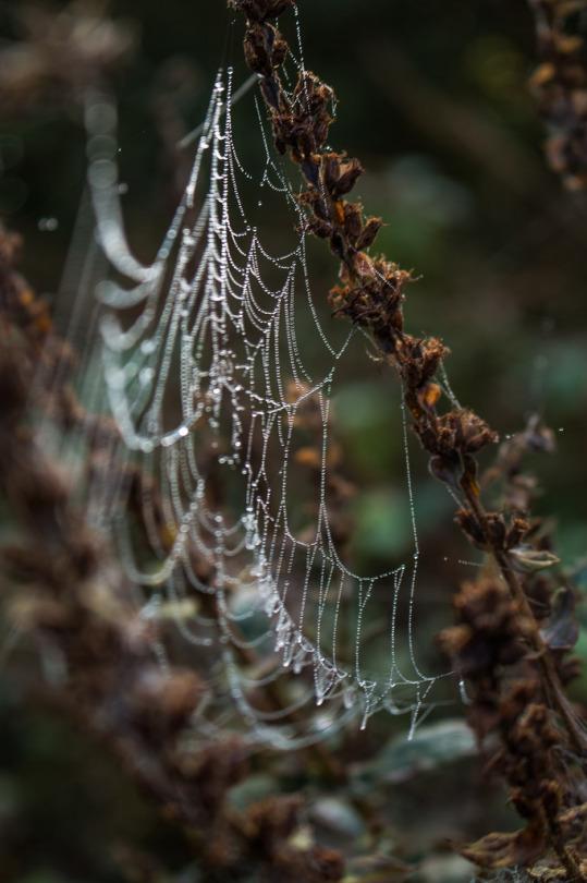 Pattycake Spiderweb